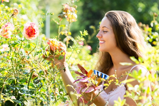 Smiling young woman working in roses plants at summer garden ; Shutterstock ID 222185932; PO: Cat Overman; Job: blog post